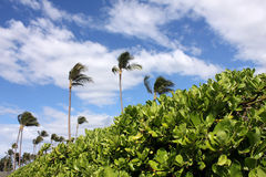 Exotic scenery with palm trees. And green vegetation Royalty Free Stock Images