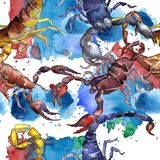 Exotic scorpion wild insect pattern in a watercolor style. Royalty Free Stock Photos