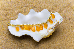 The exotic sea shell Royalty Free Stock Images