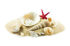 The exotic sea shell . Treasure from the sea Royalty Free Stock Photography