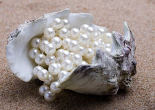 The exotic sea shell with a pearl beads lies Royalty Free Stock Photos