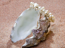 The exotic sea shell with a pearl beads lies on sa Stock Photos