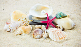 The exotic sea shell . treasure from the sea. Stock Images