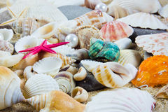 The exotic sea shell . Stock Photo