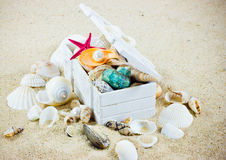 The exotic sea shell . Treasure from the sea Royalty Free Stock Photos