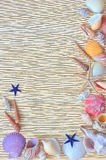 Exotic sea shells frame Royalty Free Stock Photography