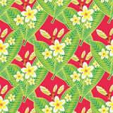 Exotic Seamless Pattern with flowers. Beautiful and colourful pattern/wallpapers  with plumeria/ frangipani flowers on red background Stock Photography