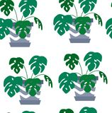 Exotic seamless pattern tropical houseplant in a flower pot. vector illustration
