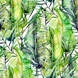 Exotic seamless pattern of watercolor tropical green leaves. Hand drawn on a white background royalty free stock photos