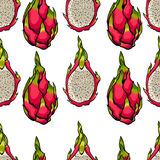Exotic seamless vector pattern. Dragon fruits on the bright white background. Stock Photography