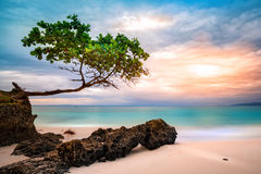 Exotic seascape with sea grape tree Royalty Free Stock Photo