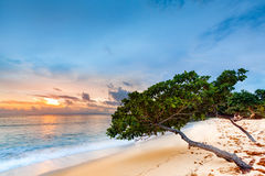 Exotic seascape with sea grape trees leaning above a sandy Caribbean beach Stock Image