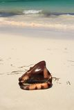 Exotic seashell. On the beach Royalty Free Stock Photo