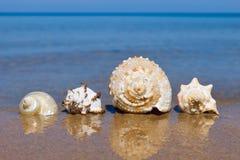 Exotic seashells lying on wet sand on the background of summer sea. Royalty Free Stock Photo
