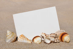 Exotic seashells and sheet of white paper on a background of san Royalty Free Stock Image