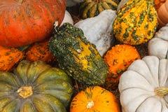 Exotic Seasonal Pumpkins Royalty Free Stock Photos