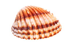 Exotic shell Stock Images