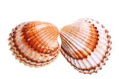Exotic shell Stock Photo
