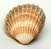 Exotic shell Royalty Free Stock Image
