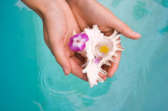 Exotic shell in hands Royalty Free Stock Image