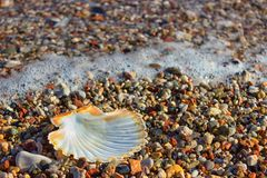 Exotic shell in the sand on the beach. Waves with foam blue  sea Royalty Free Stock Photo