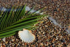 Exotic shell in the sand on the beach. Waves with foam blue  sea Royalty Free Stock Images