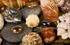 Exotic shell and stones Stock Images