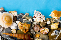 exotic shell and stones Stock Photo
