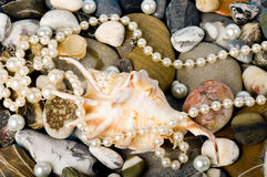 Exotic shell and stones, pearls Royalty Free Stock Images