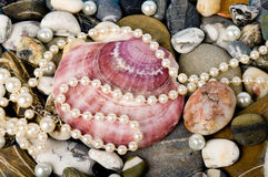 Exotic shell and stones, pearls Stock Photo