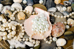 exotic shell and stones, pearls Royalty Free Stock Photo