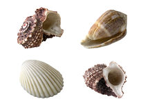 Exotic shellfish (clipping path) Royalty Free Stock Photos