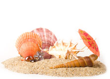 Exotic shells and starfish on sand background Royalty Free Stock Images