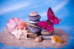 Exotic shells, stones and butterfly Stock Image