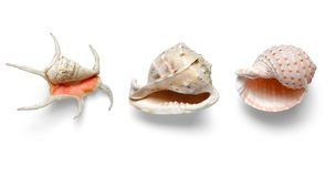 Exotic shells  on a white background Royalty Free Stock Images