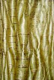 Exotic striped bark texture Stock Photography