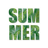 Exotic Summer Design. Tropical Palm Leaves Background. T-shirt Fashion Graphic. Royalty Free Stock Images