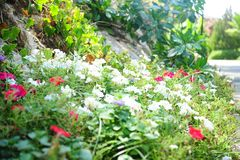Mottled flowers clearing glade, red, white stock photo