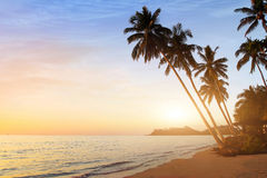 Exotic sunset beach background with palm trees Stock Photography