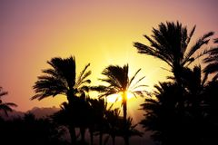 Exotic sunset with the palm trees silhouette and sun beams stock photos