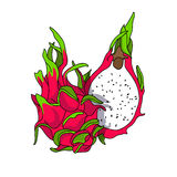Exotic and Sweet Dragon Fruit. Vector illustration on white background Stock Photo