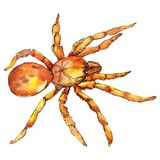 Exotic tarantula wild insect in a watercolor style isolated. For background, texture, wrapper pattern or tattoo. Exotic tarantula wild insect in a watercolor vector illustration