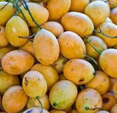 Exotic Thai Fruit. Maprang, Marian plum, Gandaria, Marian mango, Royalty Free Stock Photo