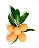 Exotic Thai Fruit, Marian plum Royalty Free Stock Photos