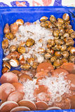 Exotic Thai seafood Royalty Free Stock Images