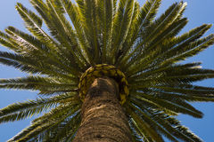 Exotic Tree Detail Royalty Free Stock Photography