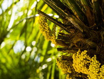 Exotic Tree Flower Royalty Free Stock Photos