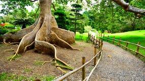 Exotic tree roots stock photo