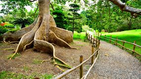 Exotic tree roots Stock Photo