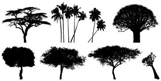 Exotic trees Royalty Free Stock Photography